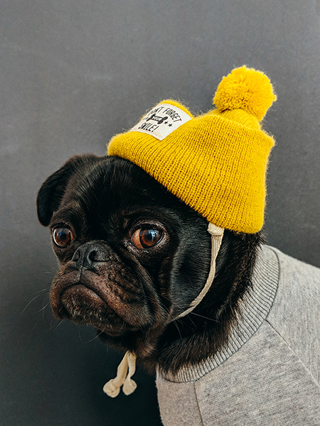 A small dog in a yellow hat and sweatshirt