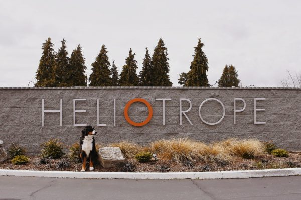 heliotrope hotel sign with dog