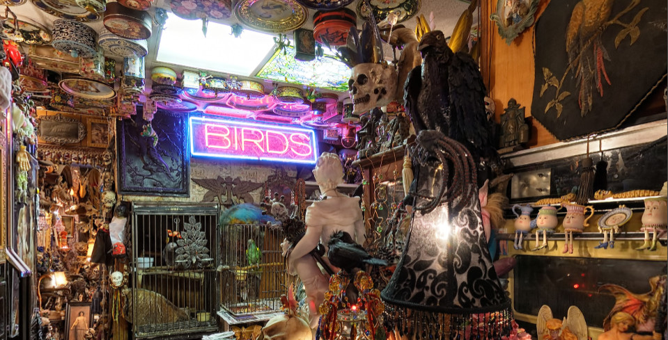 Steve's Weird House Seattle bird room